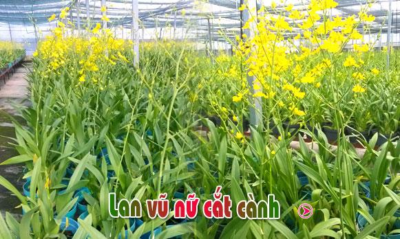 vu-nu-cat-canh
